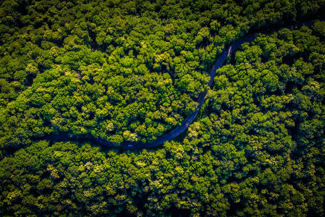 river through forest (photo credit: unsplash.com)